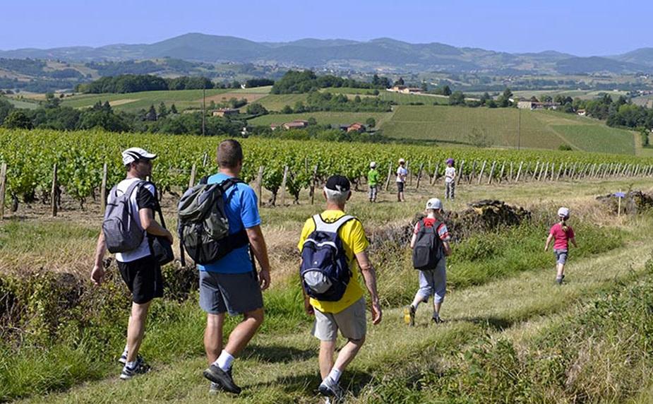 Ballade en beaujolais dans les vignobles